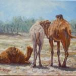 52-Trois dromadaires, huile sur toile, 24x19, disponible à la vente.