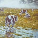 """049: Boeufs en Normandie """"Cotentin"""", huile sur toile, 73x60, disponible à la vente."""